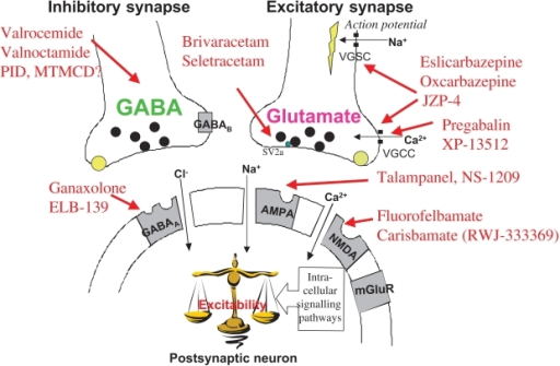 gabapentin mechanism of actions
